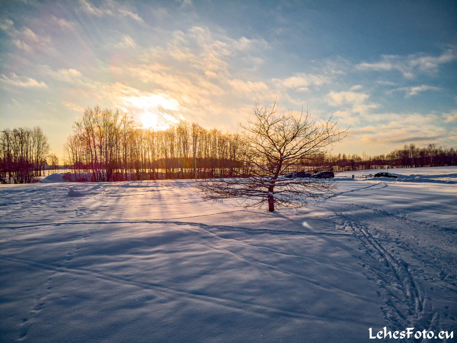 Päike ja puu